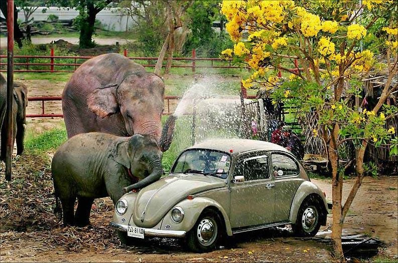 elephants can help to wash your car